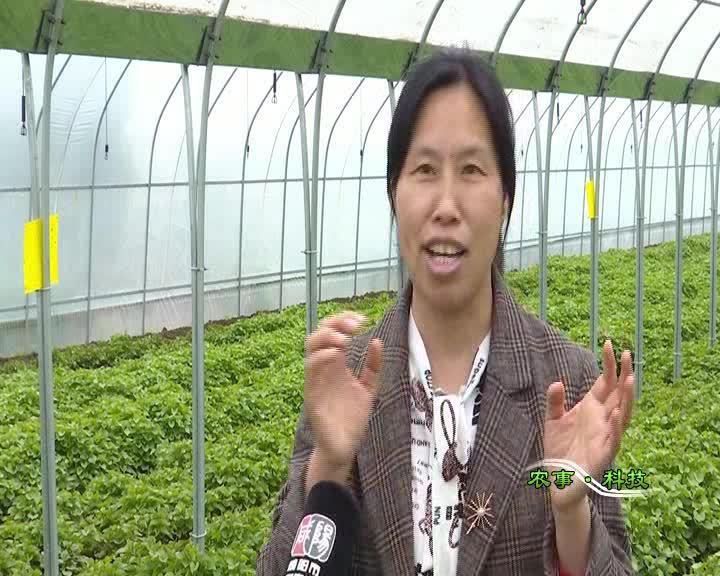 农事科技20210424
